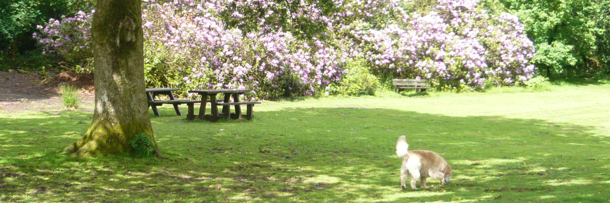Dogs Welcome and our Pet and Dog Friendly Accommodation